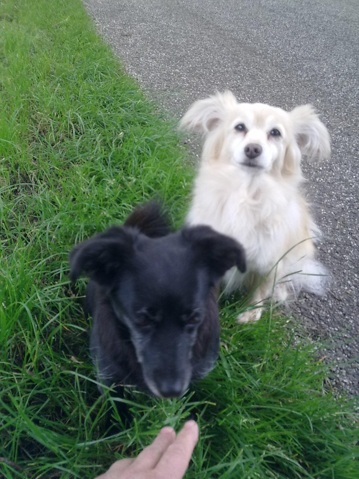 Malou en Kim onze hondjes