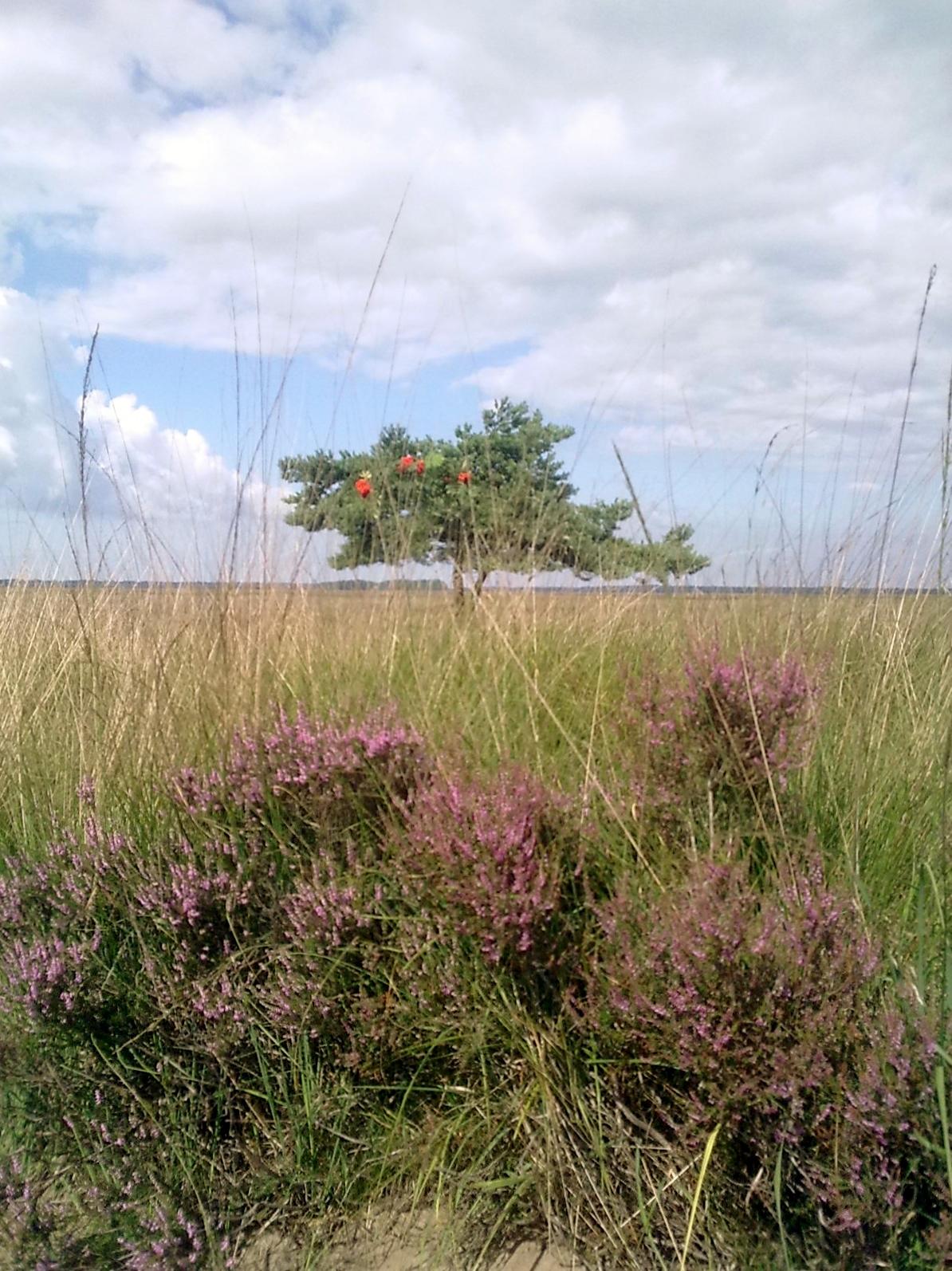 Bos en Heide Dwingelderveld