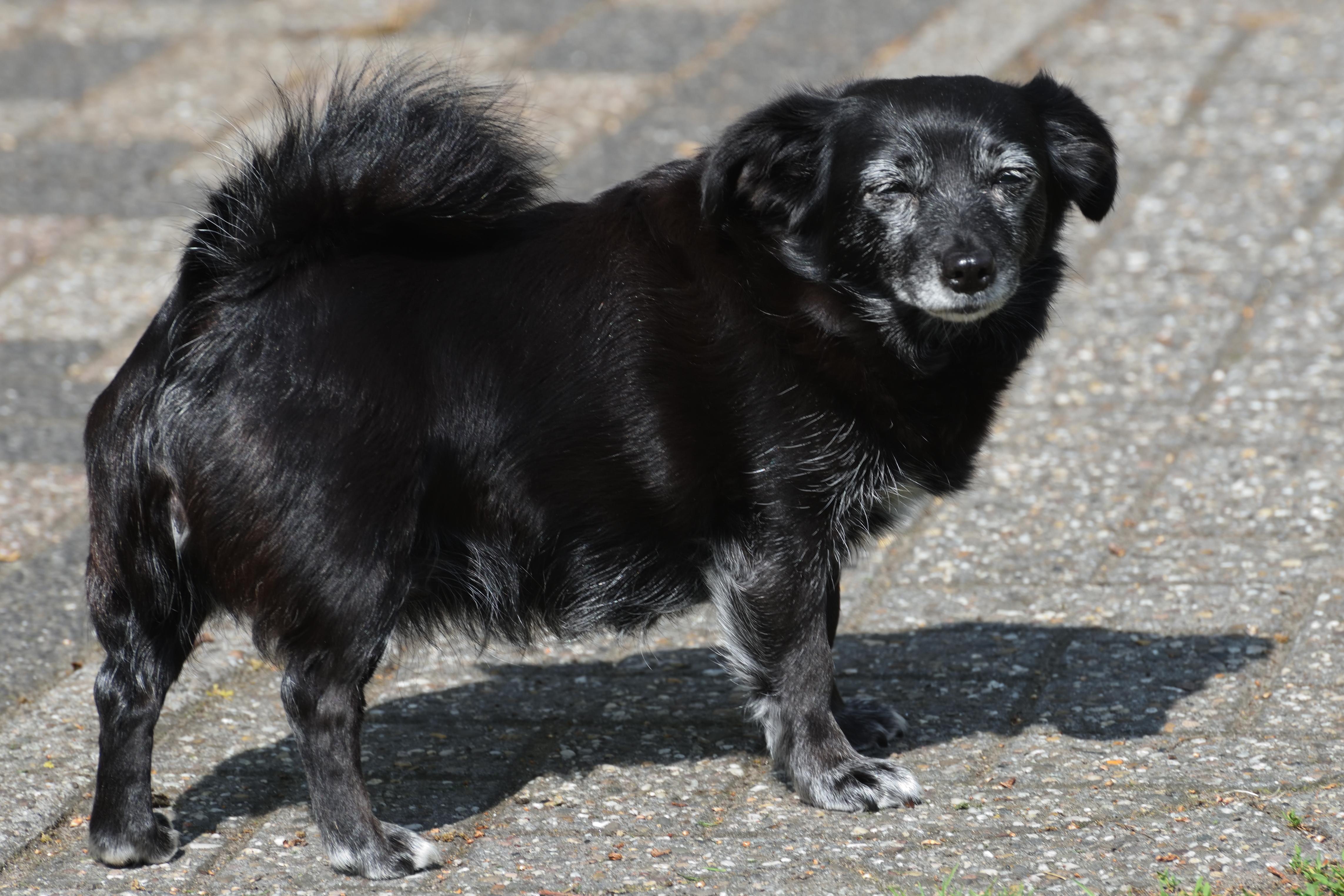 Malou ons hondje